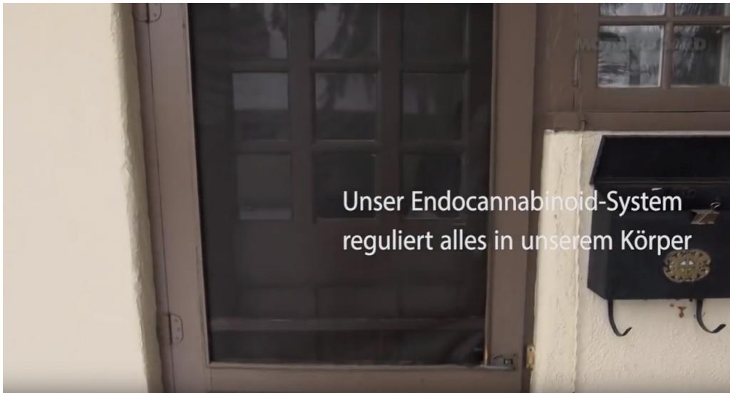 Das Endocannabinoid System